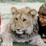 Любовь есть - уникальная дружба человека и льва