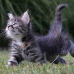 Две минутки доброты. Спасение котенка